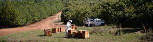 african honey bee 01 300x84 -
